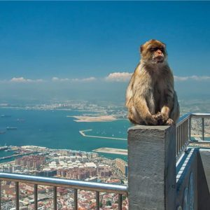gibraltar paves way for regulation of crypto and dlt companies 300x300 - Gibraltar Paves Way for Regulation of Crypto and DLT Companies
