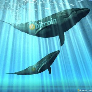 previously inactive whales are moving large amounts of btc 300x300 - Previously Inactive Whales Are Moving Large Amounts of BTC
